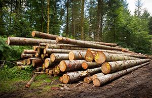Notre exploitation forestière respectueuse de son environnement